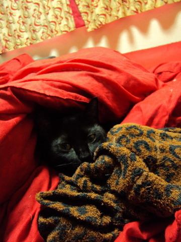 黒猫マーシャル★★★