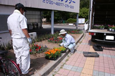花壇植え込み 1