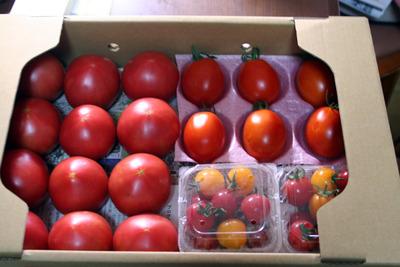 トマトセット