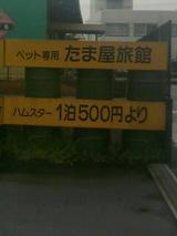da50ae6e.JPG