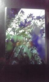 f9437ddb.jpg