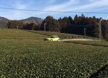 ワンデイ茶畑01