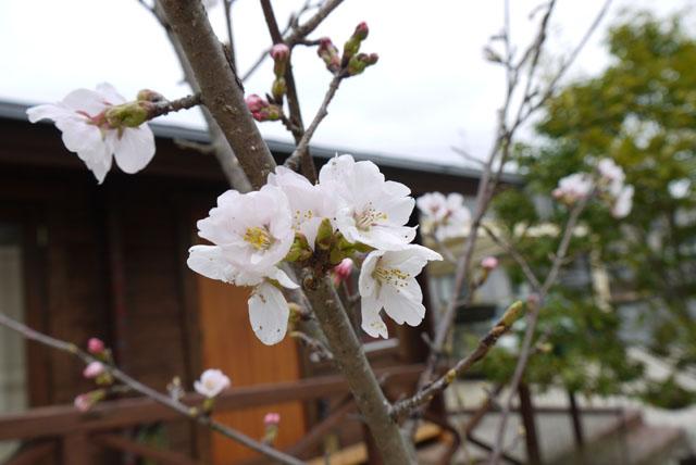 春が来た♪