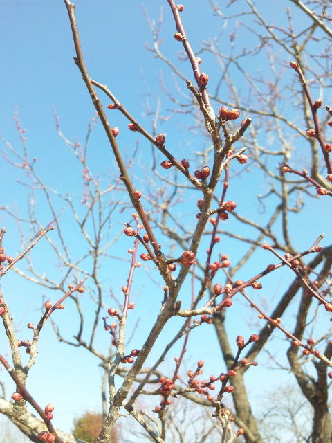 春はもうじき…