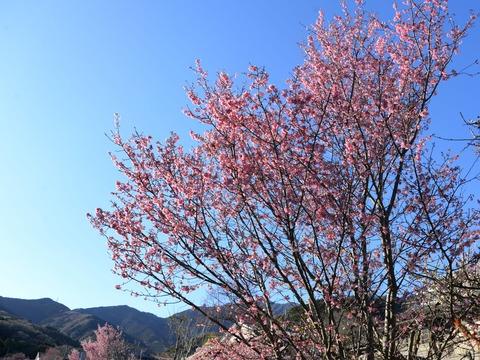 春が来た4