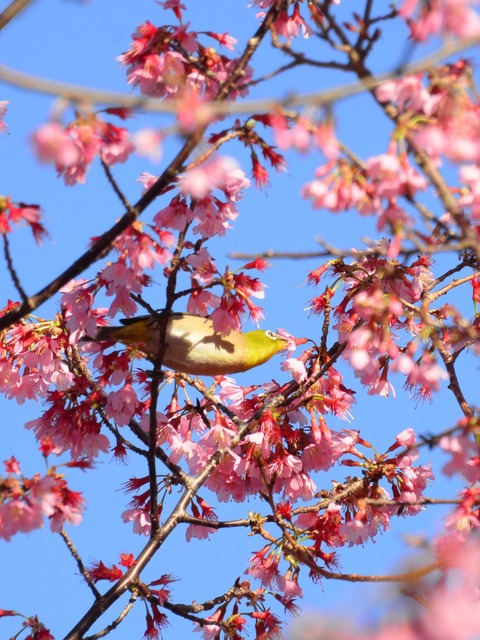 春が来た0