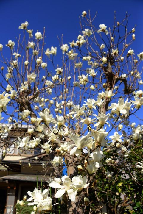 春が来た8