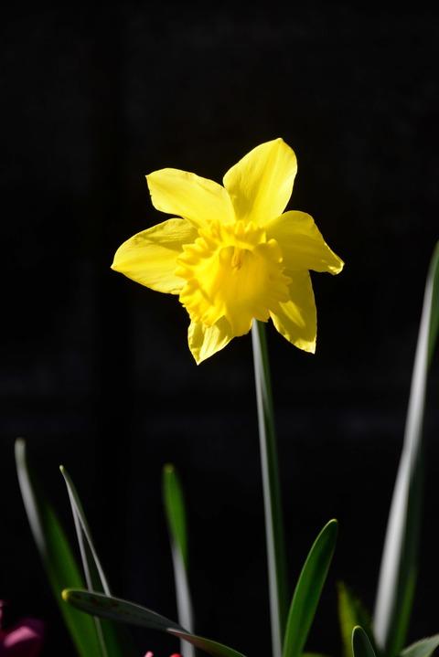 春が来た10