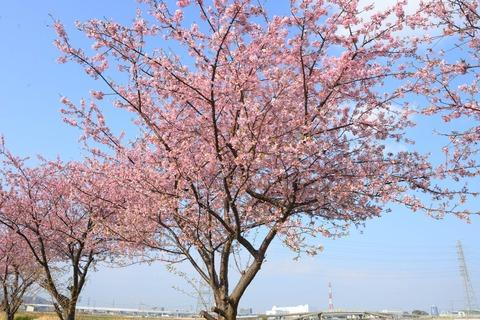 春が来た7