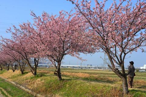 春が来た6