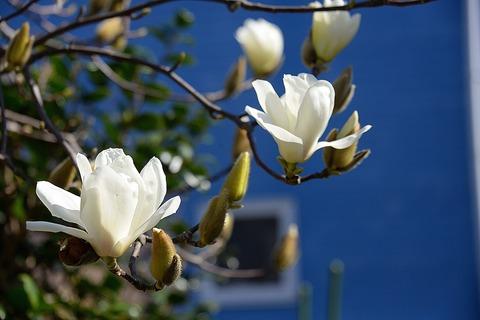 春が来た9