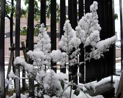 snow1102_4