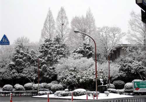 snow1102_2