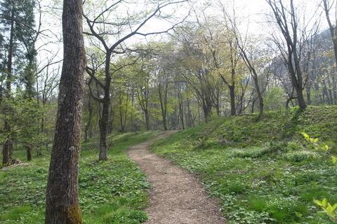 アファンの明るい森