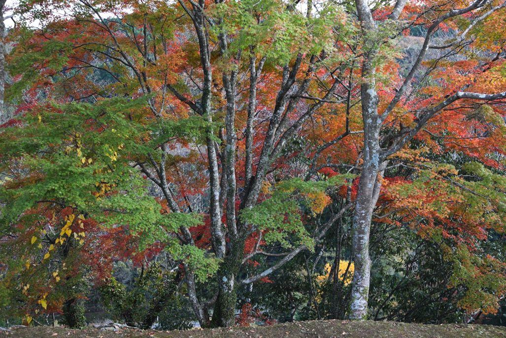 11・岡城跡・太鼓櫓跡の石垣