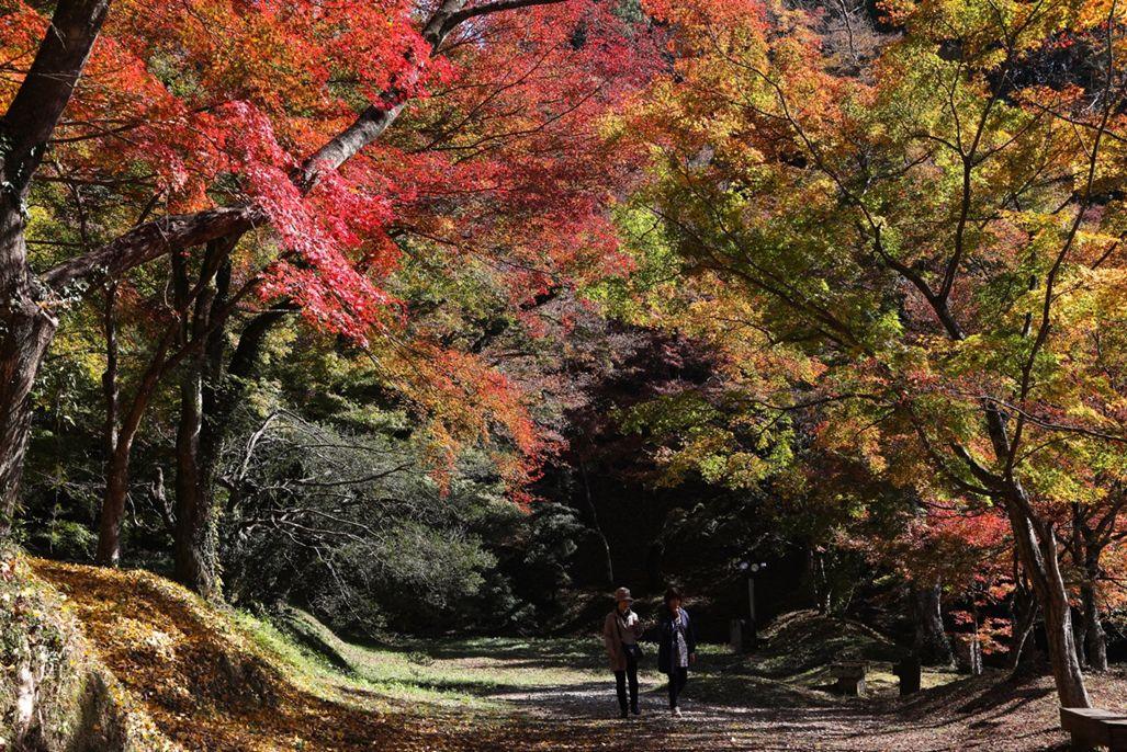 18・用作公園・「散歩道」