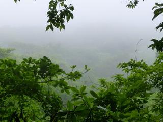 雨で森は?