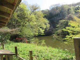 新緑あふれるミズキの池