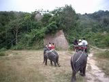 象のトレッキング