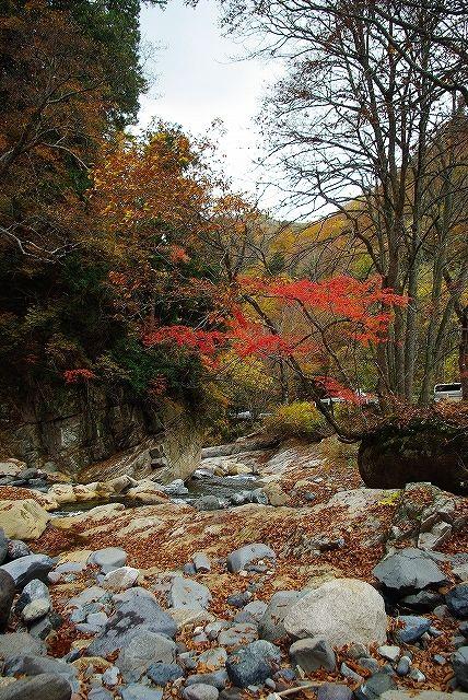 谷川2011紅葉38