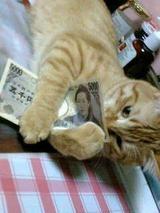 俺の金、俺の金、俺の金、俺の金