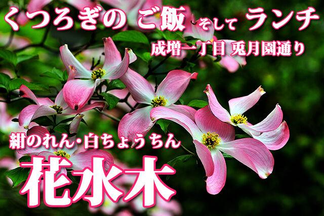 花水木 くつろぎのご飯 ランチ