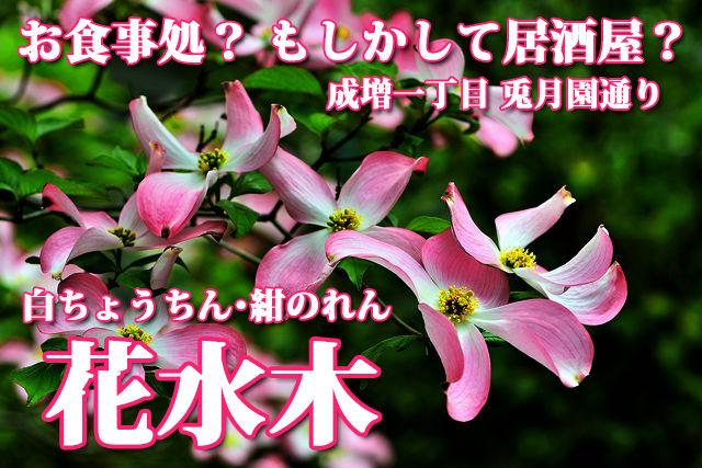 花水木 ポスター ( ハナミズキ )