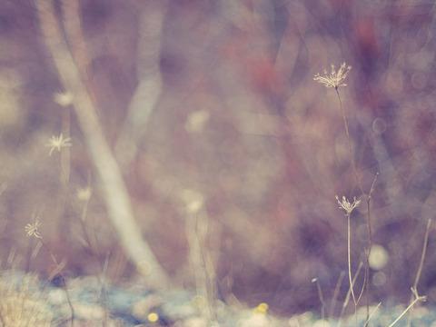 blog photo nature