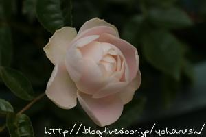 ホワイトマザーズディ2009