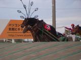 ばんえい競馬�