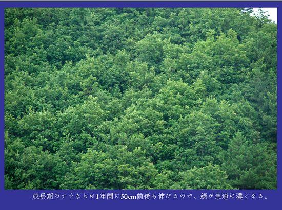 中国で20年間植林を続ける日本人 地元民が反日→親日に