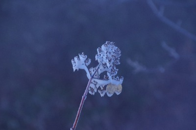 IMGP2897 霧氷