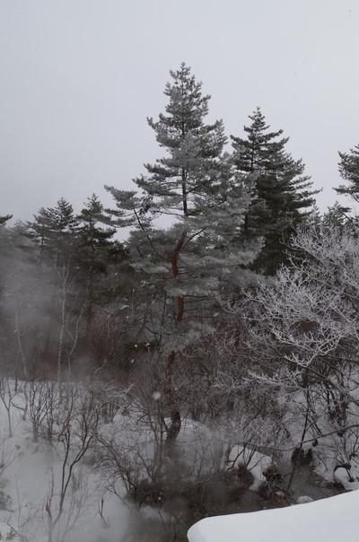 IMGP3178 霧氷