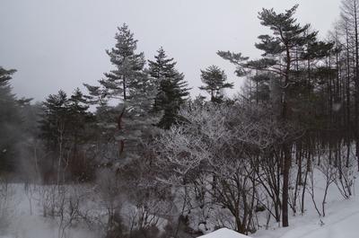 IMGP3181 霧氷