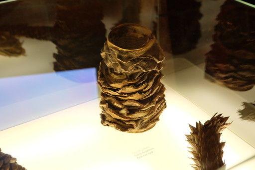 カサ・ミラの展示物