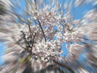 吸い込まれそうな桜の木の下で