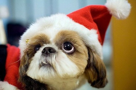 christmas_animals_640_08