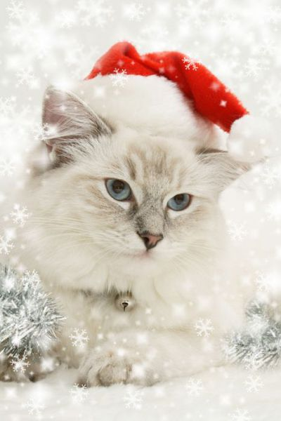 christmas_animals_640_28