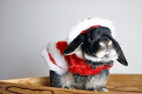 christmas_animals_640_30