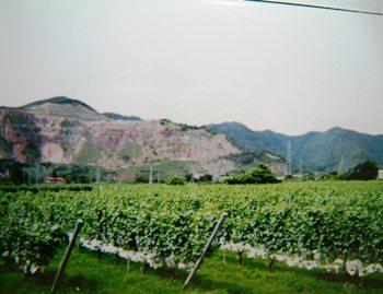 ムラサキ農場