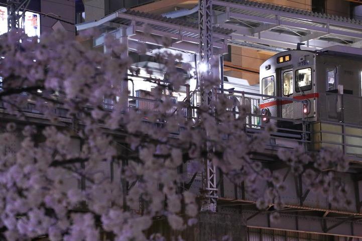 7700と桜