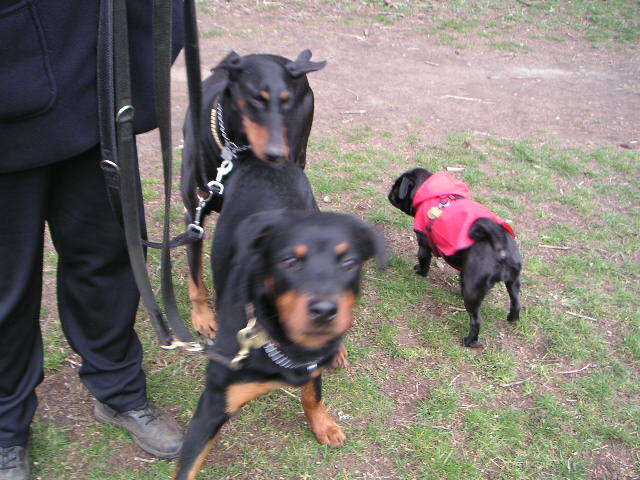 フェイフェイ&犬2匹
