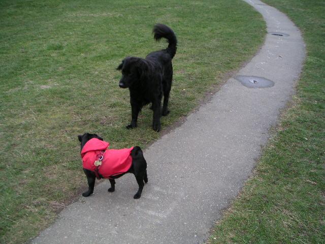 フェイフェイ&犬1匹