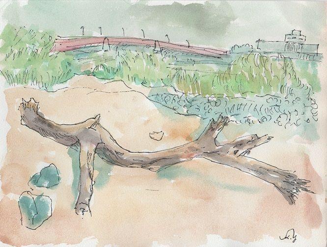 流木のある河原