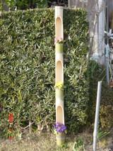 竹の筒に花