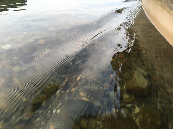 長良川の水