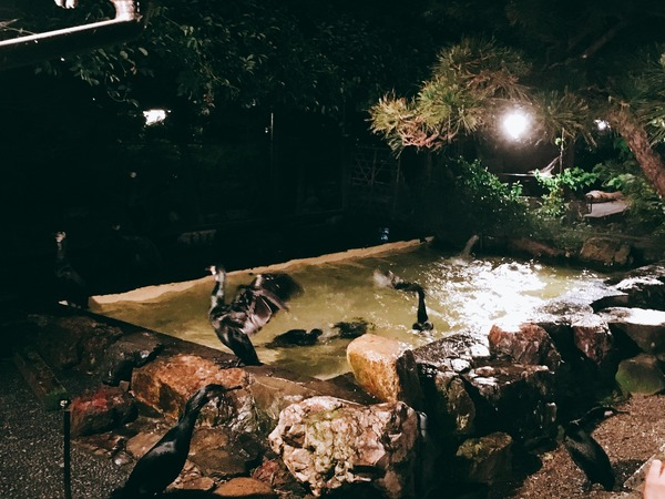 プールで鵜が水浴び