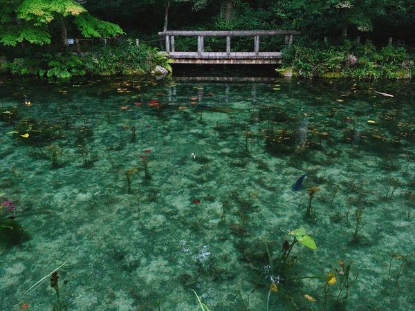 モネの池(早朝)