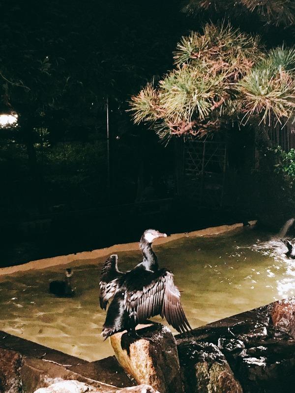 鵜が羽を広げて乾かしています