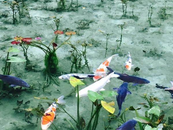 モネの池(岐阜県関市板取396)